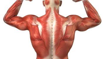 Что такое мышечный корсет и почему важно его укреплять с помощью упражнений