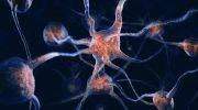 10 способов сохранить здоровье стареющего мозга, и почему это важно?