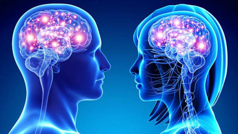 Мужской мозг больше