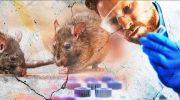 Что такое Хантавирус? Новая инфекция из Китая